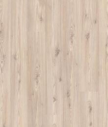 borovice baltic